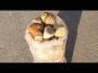 Βότσαλο Πολίτικο 3-6, 6-10 cm